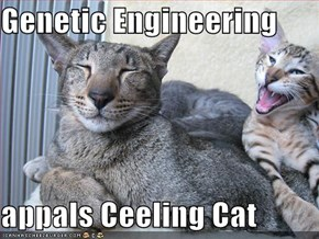 Genetic Engineering  appals Ceeling Cat
