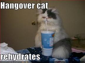 Hangover cat  rehydrates