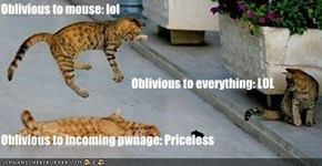 Oblivious to mouse: lol                                          Oblivious to everything: LOL Oblivious to incoming pwnage: Priceless