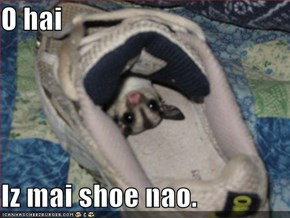 O hai  Iz mai shoe nao.