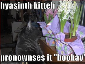 "hyasinth kitteh  pronownses it ""bookay"""