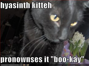 "hyasinth kitteh  pronownses it ""boo-kay"""