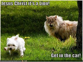 Jesus Christ it's a Lion!  Get in the car!