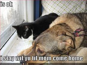 is ok  i stay wif yu til mom come home