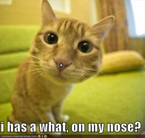 * i has a what, on my nose?