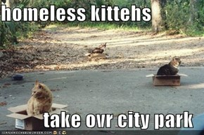 homeless kittehs  take ovr city park