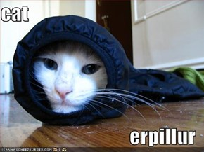 cat  erpillur