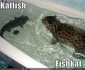Katfish  Fishkat