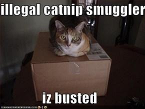 illegal catnip smuggler  iz busted