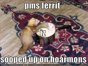 pms ferrit  iz sooped up on hoarmons