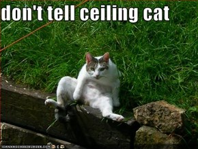 don't tell ceiling cat