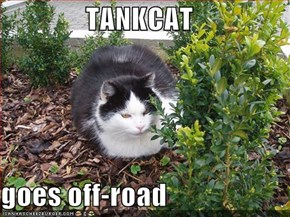 TANKCAT  goes off-road
