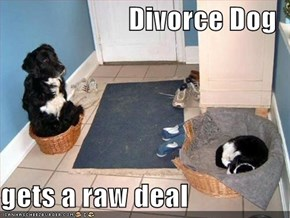 Divorce Dog  gets a raw deal