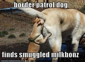 border patrol dog  finds smuggled milkbonz