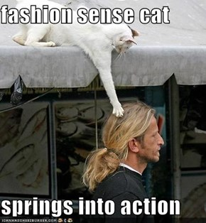 fashion sense cat  springs into action