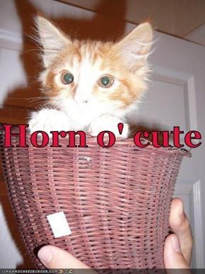 Horn o' cute