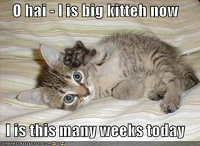 O hai - I is big kitteh now  I is this many weeks today