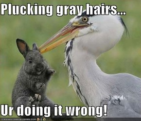 Plucking gray hairs...  Ur doing it wrong!