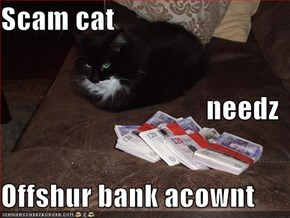 Scam cat needz Offshur bank acownt