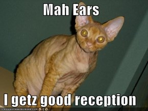 Mah Ears  I getz good reception