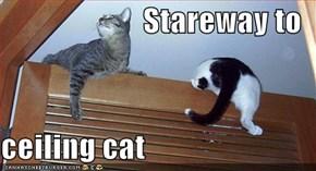 Stareway to  ceiling cat