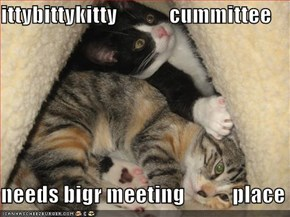 ittybittykitty            cummittee  needs bigr meeting           place
