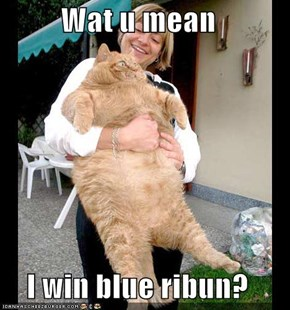 Wat u mean  I win blue ribun?