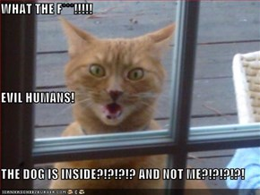 WHAT THE F***!!!!! EVIL HUMANS! THE DOG IS INSIDE?!?!?!? AND NOT ME?!?!?!?!