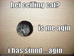 hei ceiling cat? is me agin i has sinnd....agin