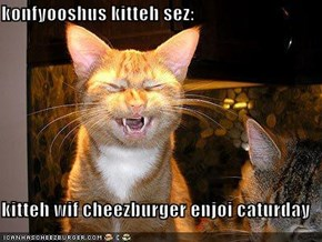 konfyooshus kitteh sez:  kitteh wif cheezburger enjoi caturday