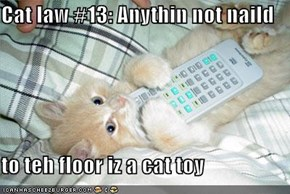 Cat law #13: Anythin not naild  to teh floor iz a cat toy