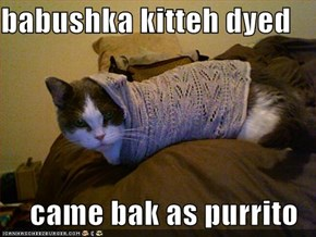babushka kitteh dyed  came bak as purrito