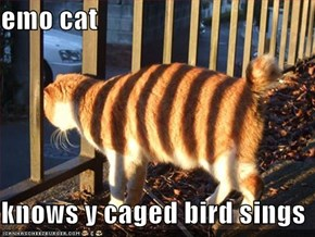 emo cat  knows y caged bird sings