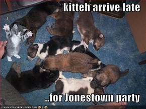 kitteh arrive late  ..for Jonestown party