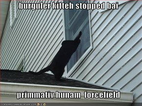 burguler kitteh stopped bai  primmativ hunam  forcefield
