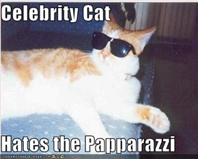 Celebrity Cat  Hates the Papparazzi