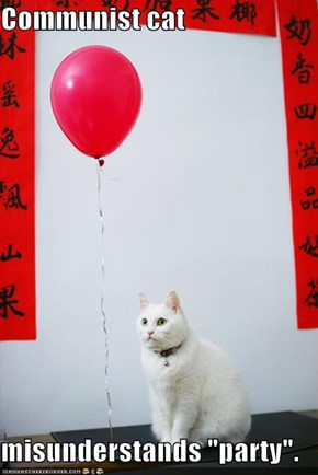 "Communist cat  misunderstands ""party""."