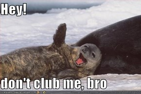 Hey!  don't club me, bro