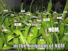 ...in the kingdom of NOM