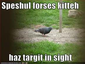 Speshul forses kitteh  haz targit in sight