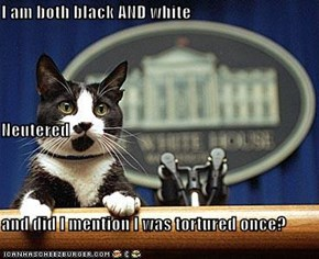 I am both black AND white Neutered and did I mention I was tortured once?