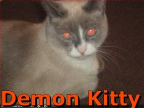 Demon Kitty
