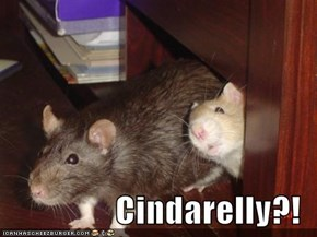 Cindarelly?!