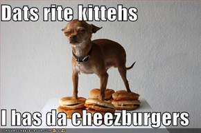 Dats rite kittehs  I has da cheezburgers