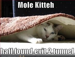 Mole Kitteh  haff found exit 2 tunnel