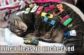 When fleas go unchecked