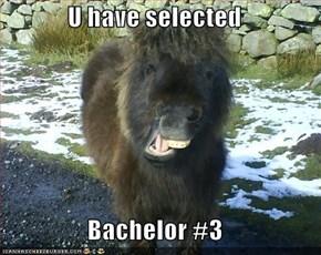 U have selected  Bachelor #3