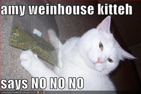 amy weinhouse kitteh  says NO NO NO