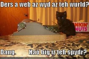 Ders a web az wyd az teh wurld?  Dang.          Hao big iz teh spydr?