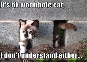 It's ok wormhole cat,  I don't understand either...
